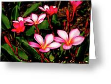 Pink Plumeria Greeting Card
