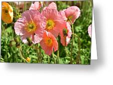 Pink Poppies 2 Greeting Card