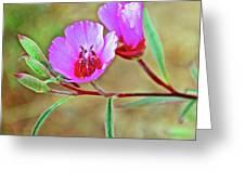 Pink Poppies In Rancho Santa Ana Botanic Garden In Claremont-california Greeting Card