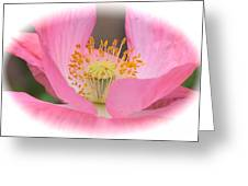 Pink Poppy Serenity Greeting Card