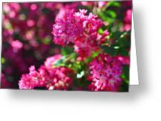 Pink Profusion 1 Greeting Card