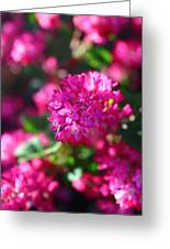 Pink Profusion 2 Greeting Card