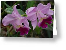 Pink Purple Orchids Greeting Card
