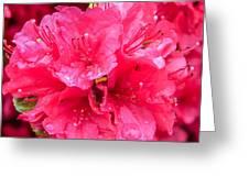 Pink Rain Greeting Card