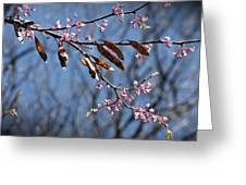 Pink Redbud Tree Blossoms- Fine Art Greeting Card