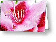 Pink Rhodie Flowers Art Prints Canvas Rhododendrons Baslee Troutman Greeting Card