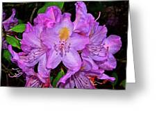 Pink Rhododendron 003 Greeting Card