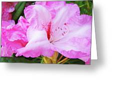 Pink Rhododendron Art Print Floral Canvas Rhodies Baslee Troutman Greeting Card
