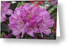 Soft Purple Rhododendron  Greeting Card