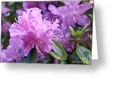 Light Purple Rhododendron With Leaves Greeting Card