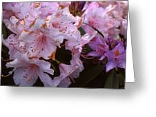 Pink Rhododendrums  Greeting Card