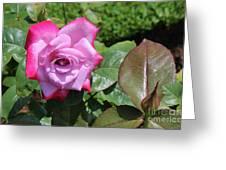 Pink Rose 1 Greeting Card
