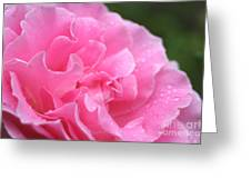 Pink Rose - 2 Greeting Card