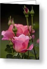 Pink Rose 2 Greeting Card