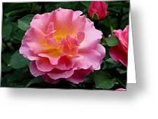 Pink Rose 3 Greeting Card