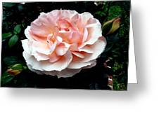 Pink Rose 4 Greeting Card