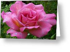 Pink Rose After Rain Greeting Card