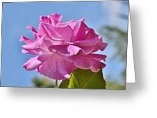 Pink Rose Against Blue Sky I Greeting Card
