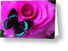 Pink Rose And Black Blue Butterfly Greeting Card