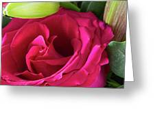 Pink Rose And Bud Close-up Greeting Card