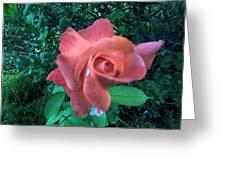 Pink Rose Awakening Greeting Card