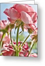 Pink Rose Back Light Greeting Card