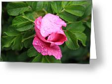 Pink Rose Bud Greeting Card