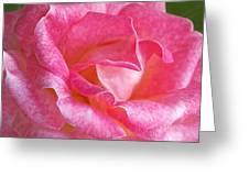 Pink Rose Close Up Greeting Card