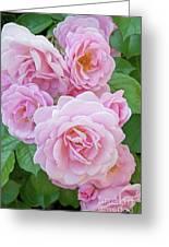 Pink Rose Cluster II Greeting Card