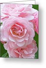 Pink Rose Cluster IIi Greeting Card