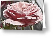 Pink Rose Faded Greeting Card