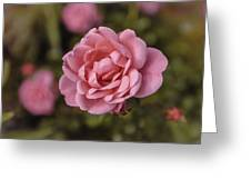 Pink Rose Instagram Greeting Card