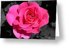 Perfect Pink Rose Greeting Card