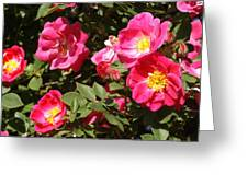 Pink Rose Of Sharon Blooms      Spring     Indiana Greeting Card