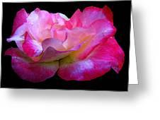 Pink Rose On Black 4 Greeting Card