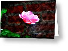 Pink Rose On Red Brick Wall Greeting Card