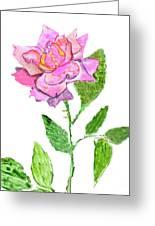 Pink Rose, Painting Greeting Card