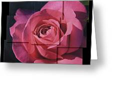 Pink Rose Photo Sculpture Greeting Card