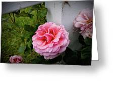 Pink Rose Greeting Card by Valeria Donaldson