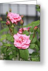 Pink Rose With Buds Greeting Card