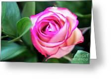 Pink Rose With Leaves Greeting Card