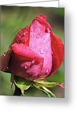 Pink Rosebud Greeting Card