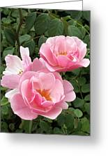 Pink Roses 1 Greeting Card