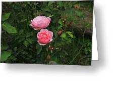 Pink Roses In A Garden Greeting Card