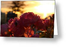 Pink Roses Sunset Greeting Card