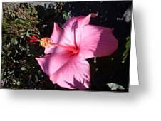 Pink Shadows Greeting Card