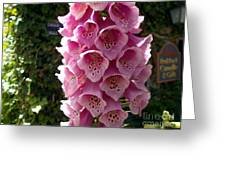 Pink Show Off Greeting Card