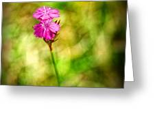 Pink Greeting Card by Silvia Ganora
