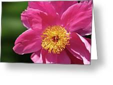 Pink Single Peony Greeting Card