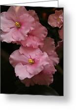 Pink Slippers Greeting Card